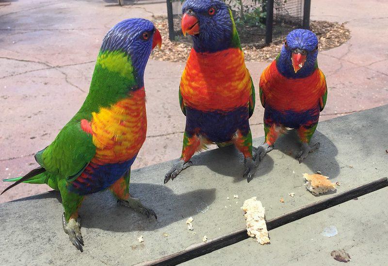 3 Amigos in agile